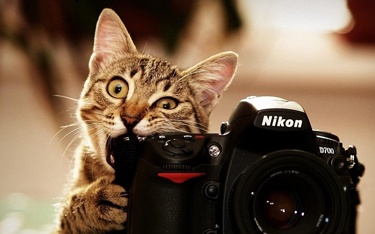 appareil-photo-chat