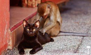 Chat et singe