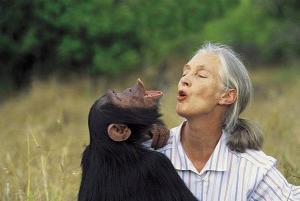 Jane Goodall chimpanzé
